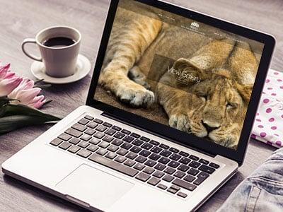web-design-ahro